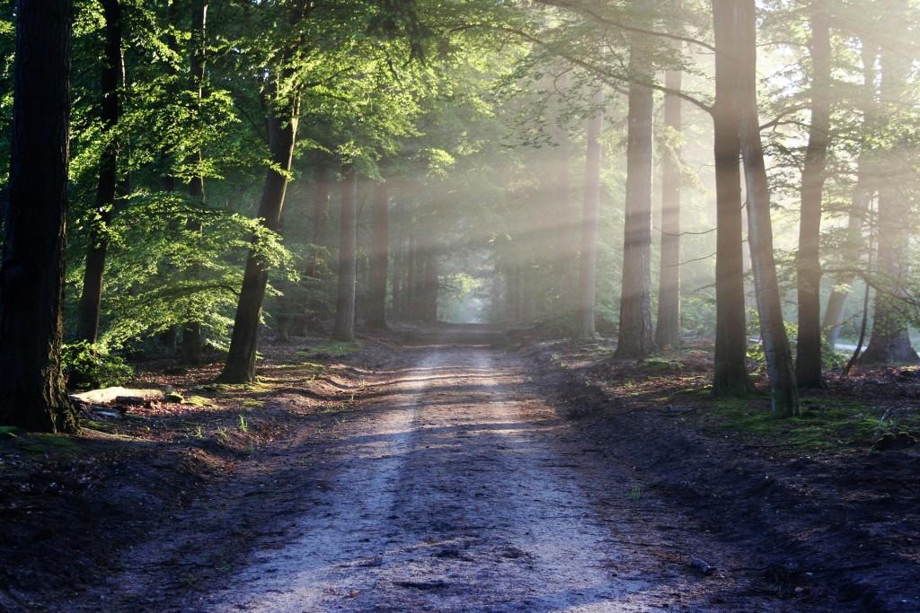 Trailrunning: Natur pur auf unbekannten Pfaden